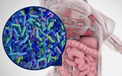 Who are ProVen Probiotics?
