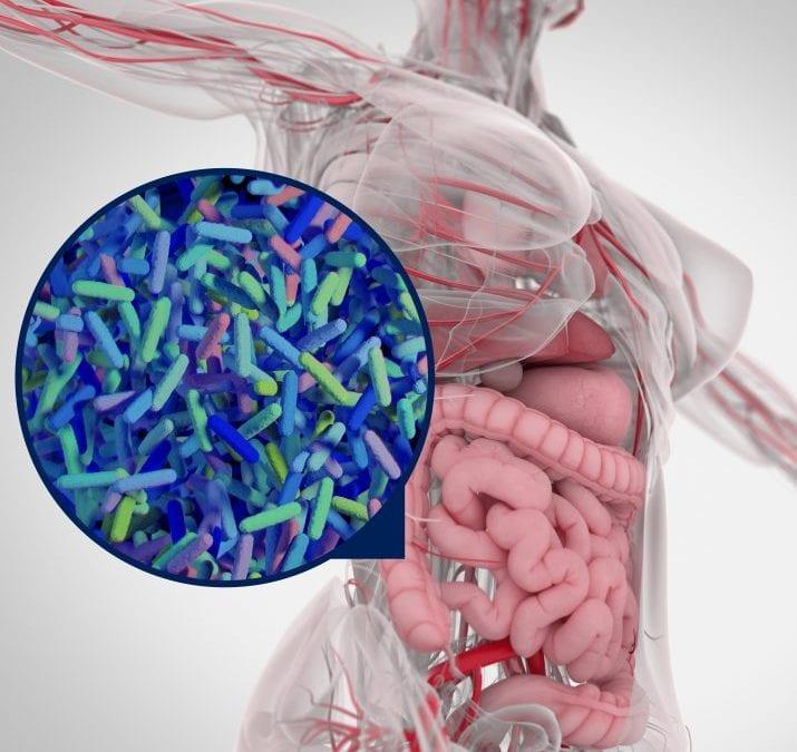 Who are ProVen Probiotics?